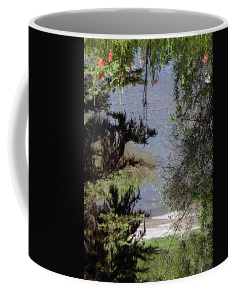 Woods Coffee Mug featuring the photograph Outta The Woods by Barb Dalton