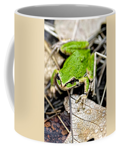 Pacific Tree Frog Coffee Mug featuring the photograph Pacific Tree Frog 2a by Sharon Talson