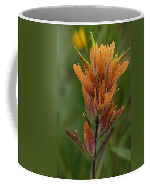 Flower Coffee Mug featuring the photograph Paintbrush Peach by Kevin Buffington