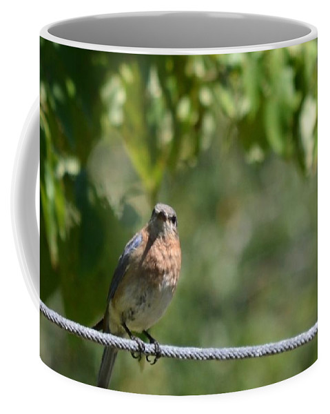 Painted Blue Coffee Mug featuring the photograph Painted Blue by Maria Urso