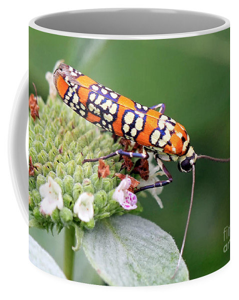 Bugs Coffee Mug featuring the photograph Painted Lady by Geoff Crego