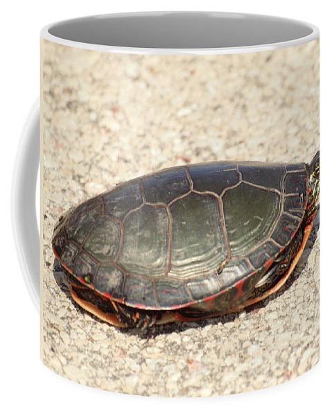 Painted Turtle Coffee Mug featuring the photograph Painted Turtle by Thomas Young
