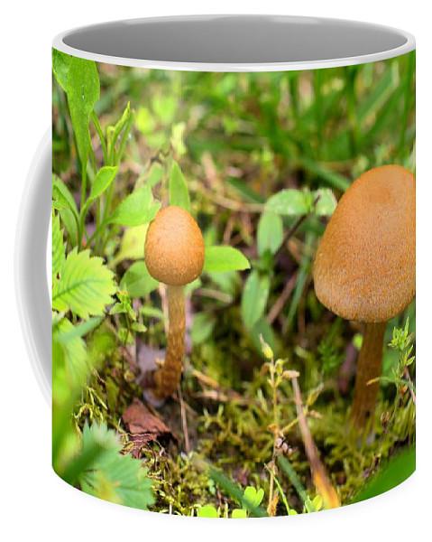 Mushroom Coffee Mug featuring the photograph Pair O Mushrooms by Kathryn Meyer