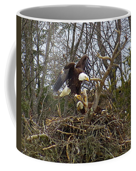 Bald Eagles Coffee Mug featuring the photograph Pair Of Bald Eagles At Their Nest by MTBobbins Photography