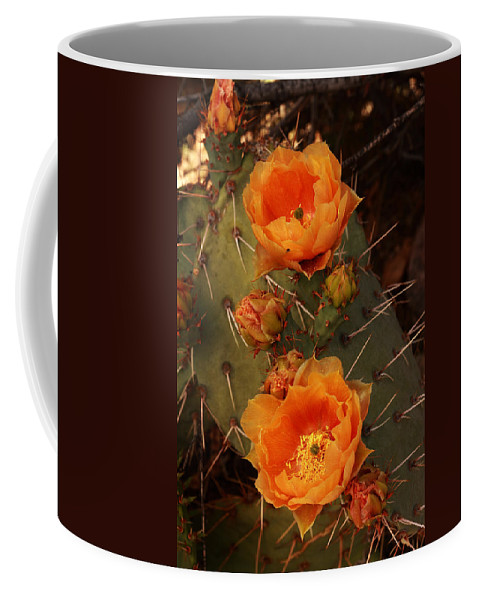Cactus Coffee Mug featuring the photograph Pair Of Prickly Pear Cactus Blooms In The Sandia Foothills by Alan Vance Ley