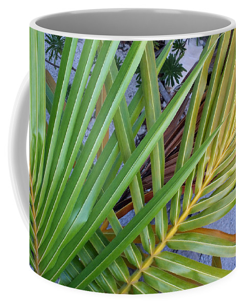 Duane Mccullough Coffee Mug featuring the photograph Palm Leaf Abstract by Duane McCullough