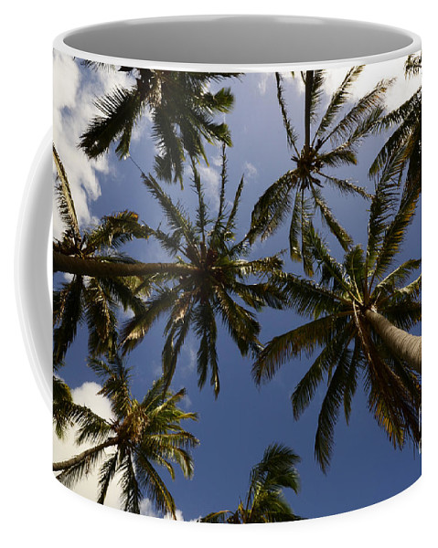Palm Coffee Mug featuring the photograph Palm Trees 3 by Bob Christopher