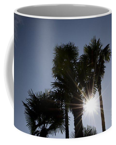 Pal Coffee Mug featuring the photograph Palm Trees In Backlit by Mats Silvan