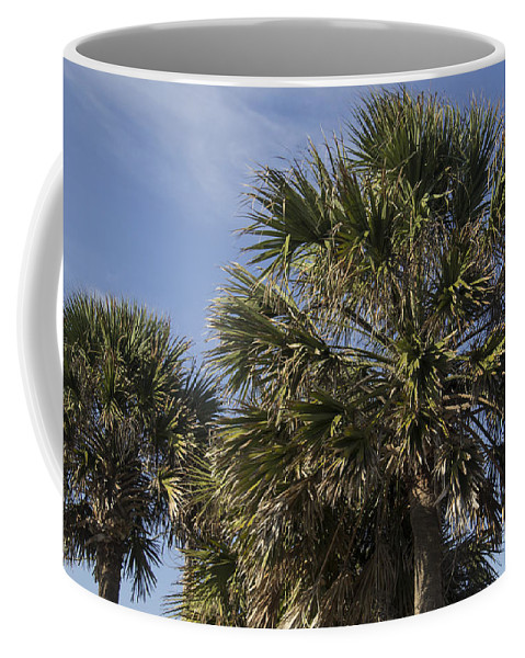 Palmetto Coffee Mug featuring the photograph Palmetto by Teresa Mucha