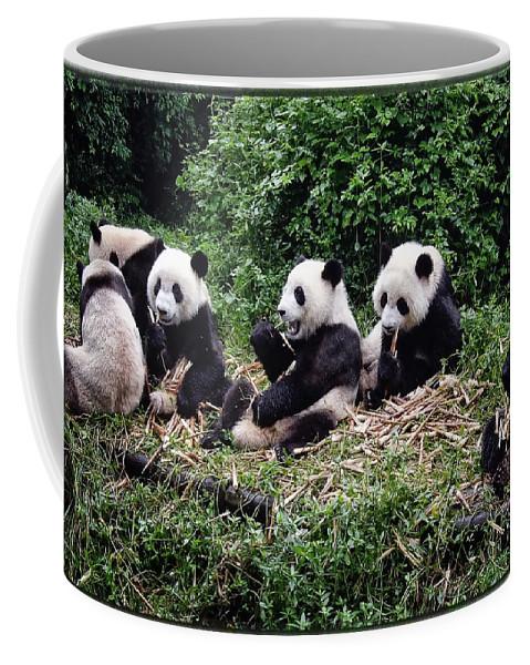 Animal Coffee Mug featuring the photograph Pandas In China by Joan Carroll