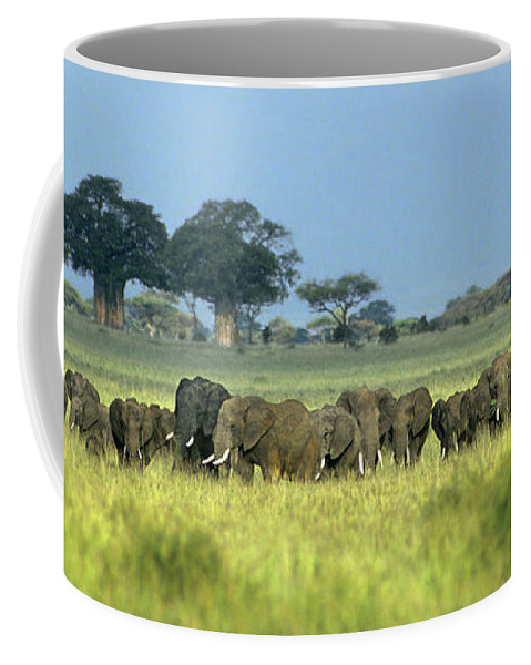 Africa Coffee Mug featuring the photograph Panorama African Elephant Herd Endangered Species Tanzania by Dave Welling