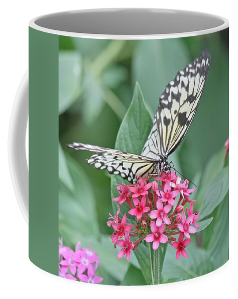 Butterfly Coffee Mug featuring the photograph Paper Kite Butterfly - 2 by Kim Hojnacki