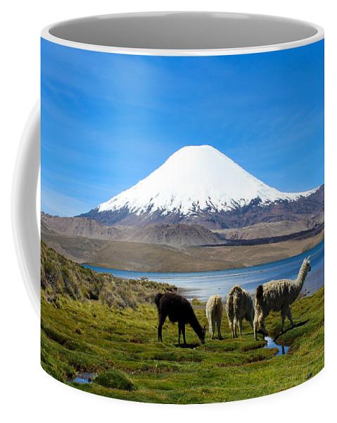 Chile Coffee Mug featuring the photograph Parinacota Volcano Lake Chungara Chile by Kurt Van Wagner