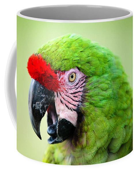 Parrot Coffee Mug featuring the photograph Parrot by Sebastian Musial