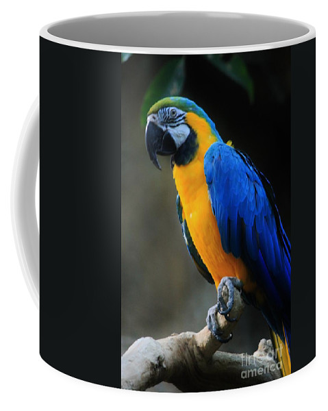 Parrot Coffee Mug featuring the photograph Parrot by Tonya Hance