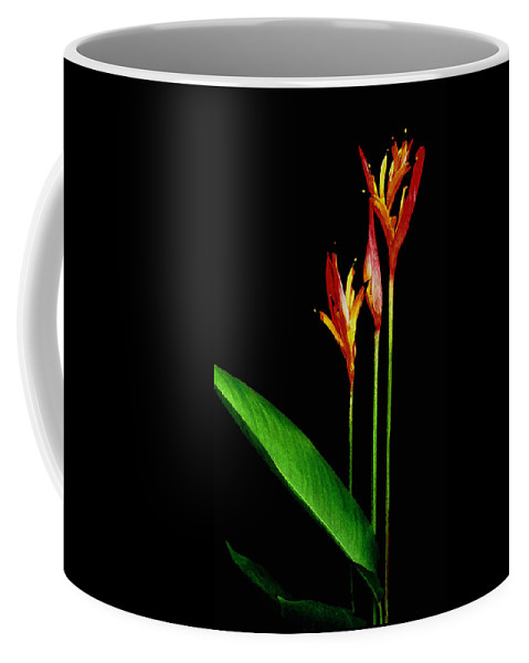 Hawaii Iphone Cases Coffee Mug featuring the photograph Parrots Beak Heliconia by James Temple