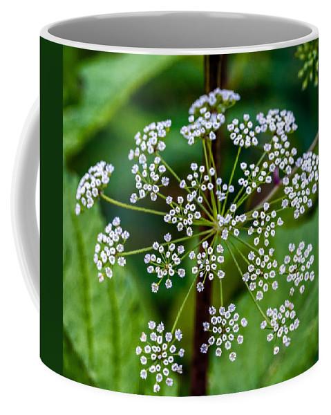 Weed Coffee Mug featuring the photograph Parsnip by Steve Harrington