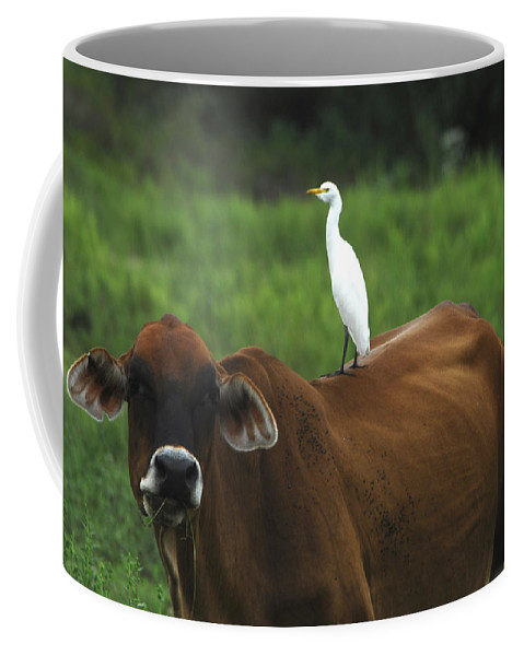 Cow Coffee Mug featuring the photograph Partners I by David Mortenson