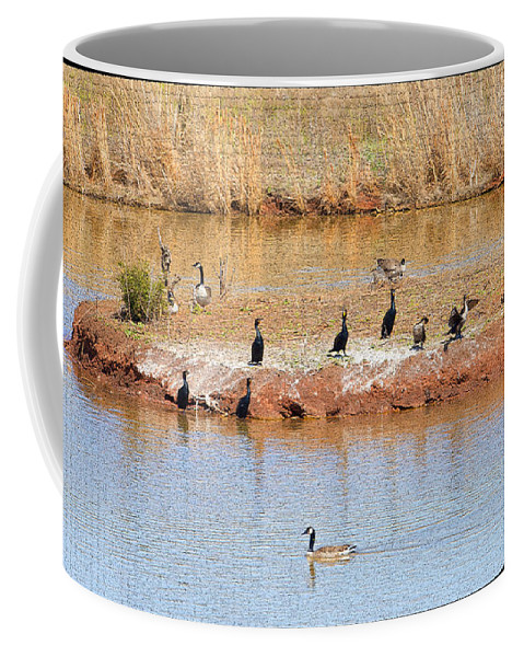 Birds Coffee Mug featuring the photograph Party Island by Betty LaRue