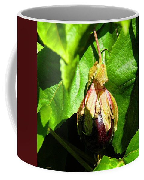 Passion Fruit Coffee Mug featuring the photograph Passion Fruit 10-18-13 By Julianne Felton by Julianne Felton