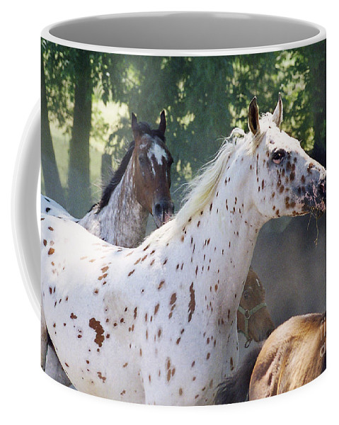 Appaloosa Coffee Mug featuring the photograph Patches And Dots by Angel Ciesniarska
