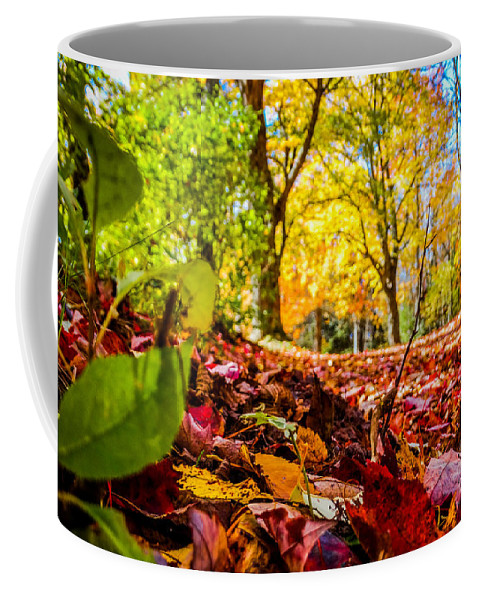 Autumn Coffee Mug featuring the photograph Path Of Leaves by Charlene Gauld