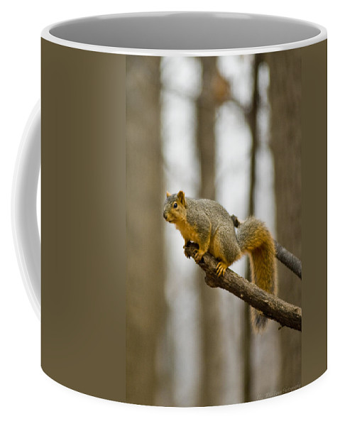 Squirrel Coffee Mug featuring the photograph Pause Before Jump by Crystal Heitzman Renskers