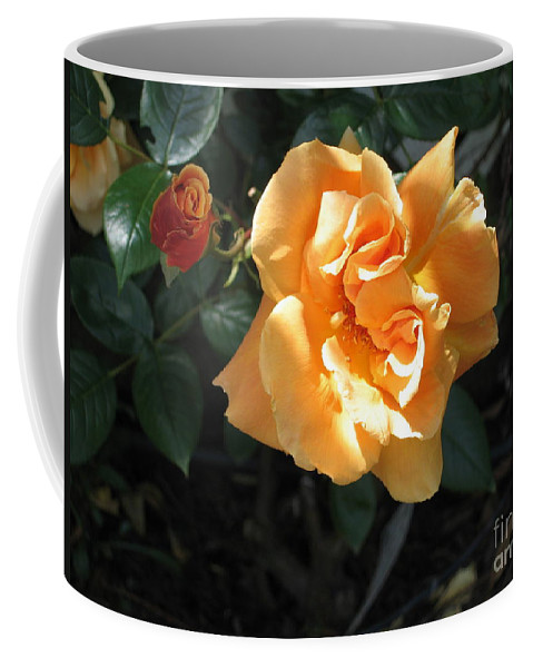 Flower Coffee Mug featuring the photograph Peach Rose by Jay Milo