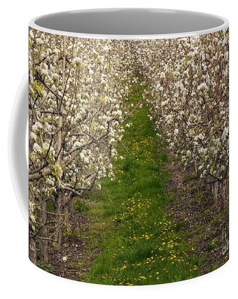 Pear Coffee Mug featuring the photograph Pear Blossom Lane by Mike Dawson