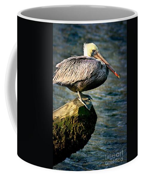 Bird Coffee Mug featuring the photograph Pelican On A Pole by Joan McCool