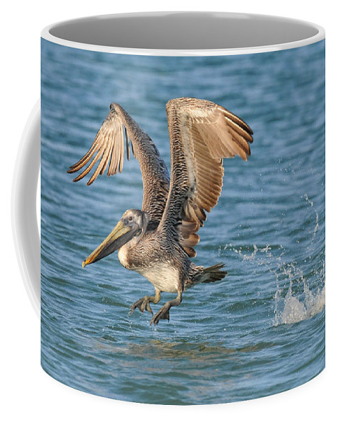 Pelican Coffee Mug featuring the photograph Pelican Taking Off by Dave Mills