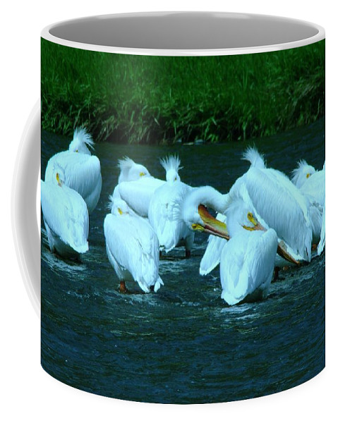 Birds Coffee Mug featuring the photograph Pelicans Hanging Out by Jeff Swan