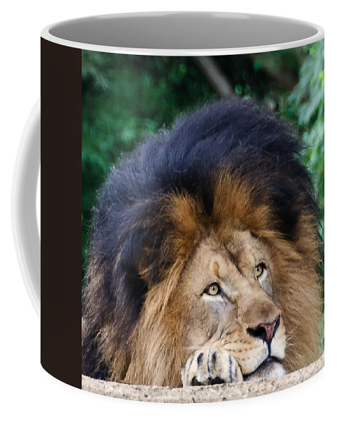 National Zoo Coffee Mug featuring the photograph Pensive Lion by Georgette Grossman