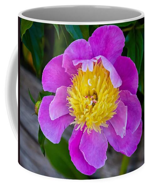 Bolton Coffee Mug featuring the photograph Peony 2 by Steve Harrington