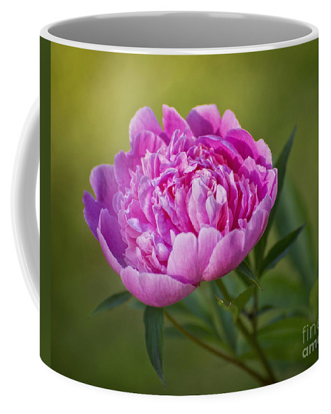 Pink Coffee Mug featuring the photograph Peony by Claudia Kuhn