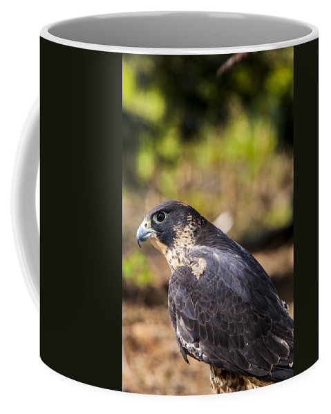 Aerial Coffee Mug featuring the photograph Peregrine Falcon by Jack R Perry