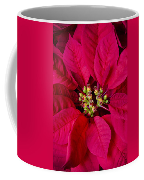 Poinsettias Coffee Mug featuring the photograph Perfect Poinsettias by Rich Franco