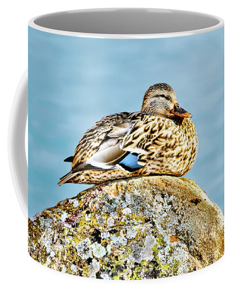 Duck Coffee Mug featuring the photograph Perfect Resting Rock by Abram House