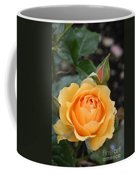 Rose Coffee Mug featuring the photograph Perfect Rose by Christiane Schulze Art And Photography