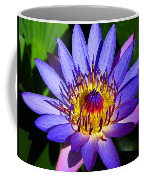Lilly Coffee Mug featuring the photograph Perfect Water Lily by Lynn Bauer