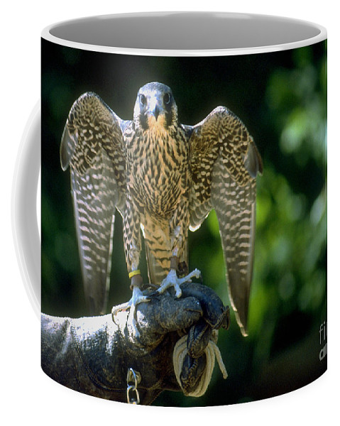 Bird Coffee Mug featuring the photograph Perigrine Falcon by Gary Gingrich Galleries