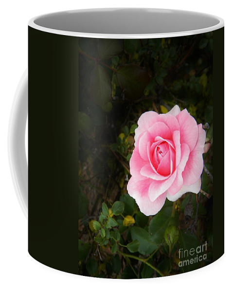Springtime Coffee Mug featuring the photograph Personally Pink by Matthew Seufer