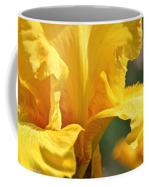 Flower Coffee Mug featuring the photograph Phaeton's Close Up by Susan Herber