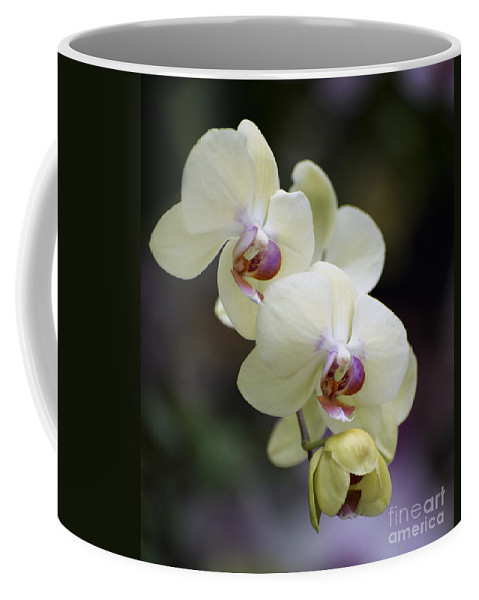 Yellow-green Orchid Coffee Mug featuring the photograph Phal Ming Chao Dancer 0754 by Terri Winkler