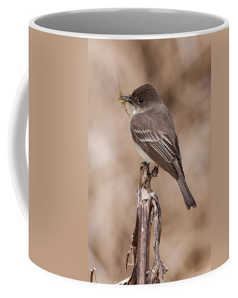 Albion Hills Coffee Mug featuring the photograph Phoebe Nesting by Richard Kitchen
