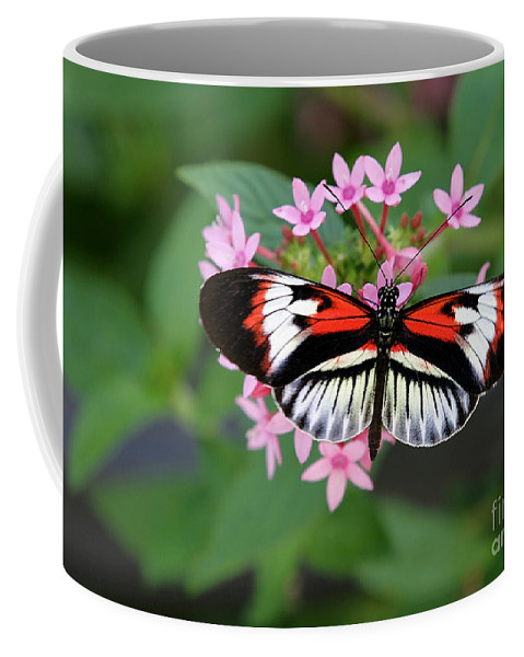 Macro Coffee Mug featuring the photograph Piano Key Butterfly On Pink Penta by Sabrina L Ryan