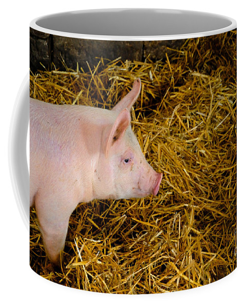 Animal Coffee Mug featuring the photograph Pig Standing In Hay by Amy Cicconi