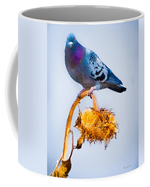 Pigeon Coffee Mug featuring the photograph Pigeon On Sunflower by Bob Orsillo