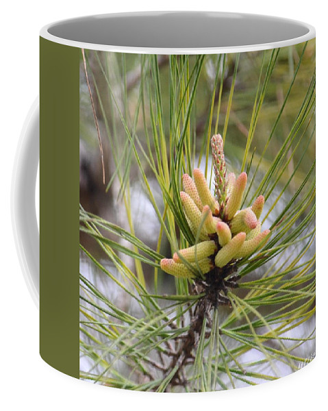 Pine Catkins Coffee Mug featuring the photograph Pine Catkins by Maria Urso