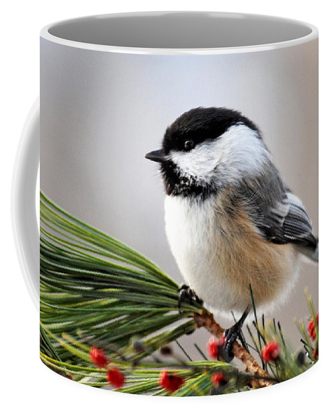 Black Capped Chickadee Coffee Mug featuring the photograph Pine Chickadee by Christina Rollo